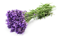 Aromatherapy Massage Treatments Toronto